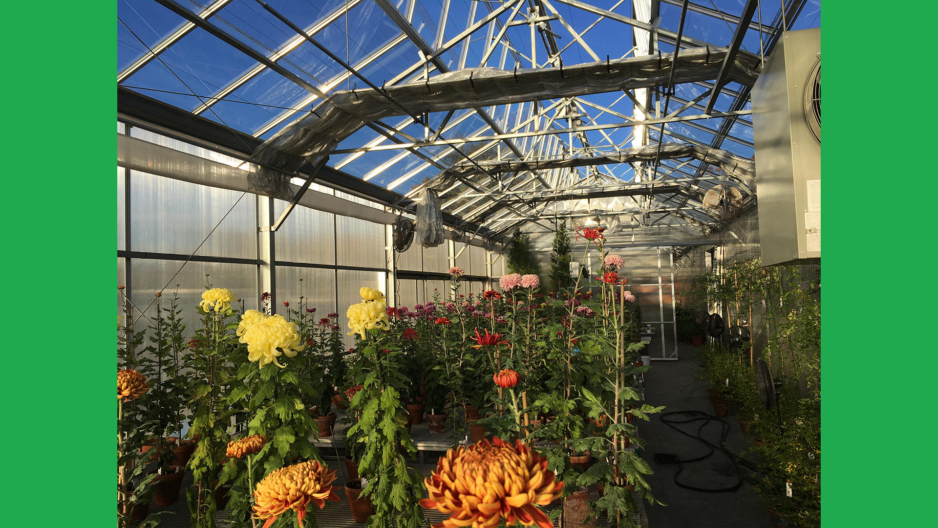 Another view of the Hingham Nursery greenhouses.