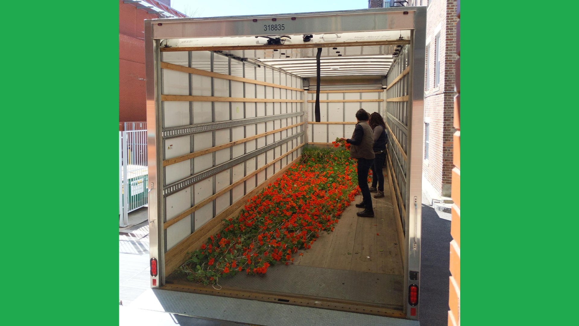 Nasturtiums in the Horticulture truck, 2019. They take up the full length of the truck in transport!