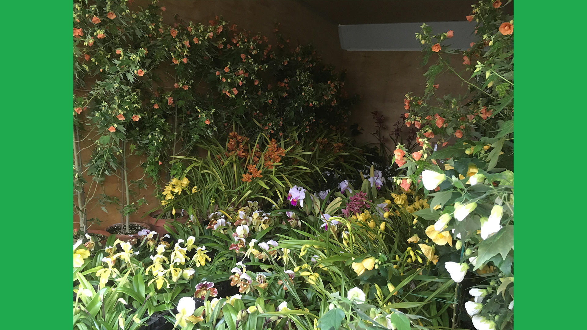 The same truck view, with all of the midwinter tropics for our January display.