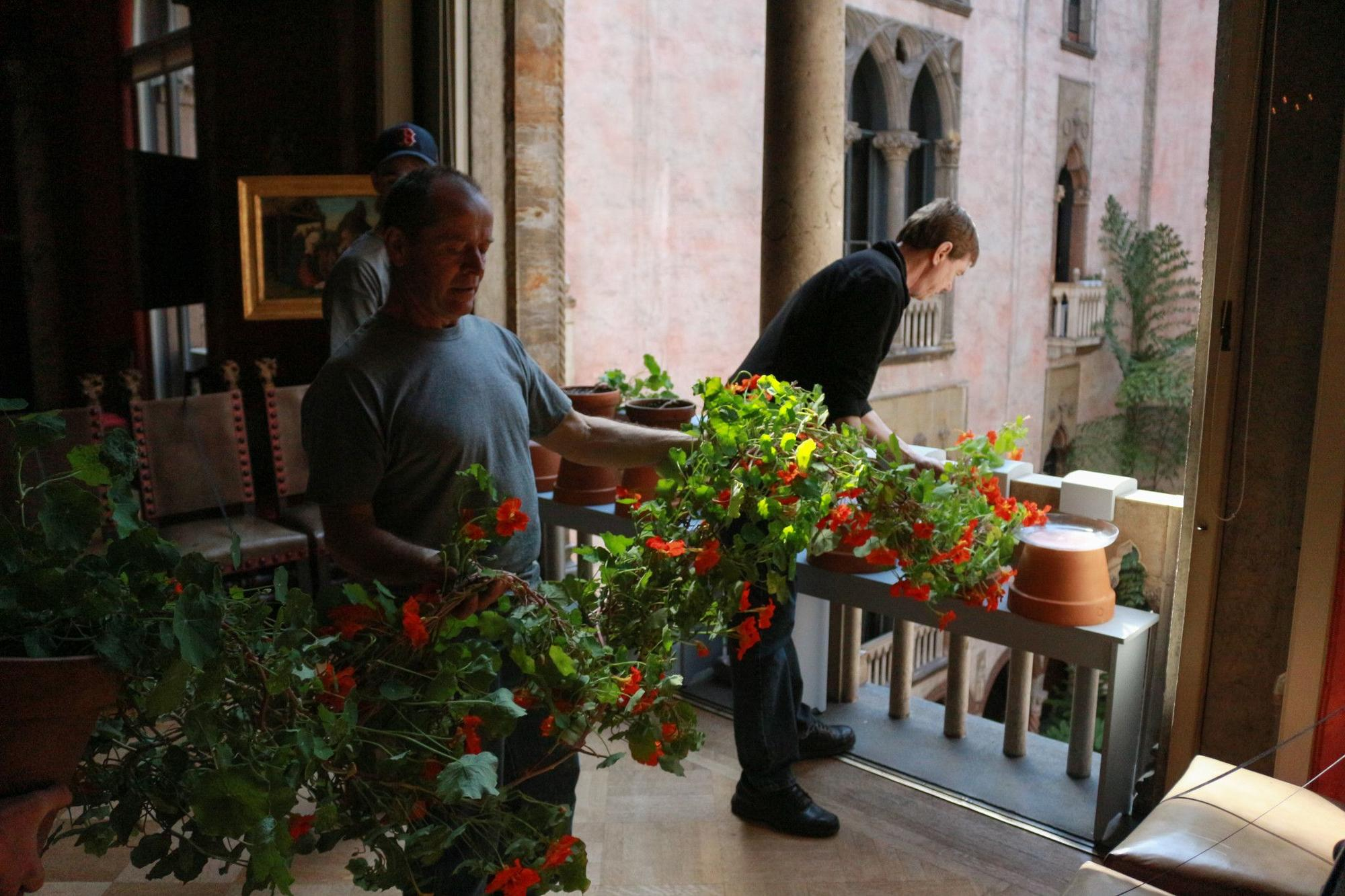 Former Chief Horticulturalist Stan Kozak prepares to guide the nasturtiums down through the Courtyard, to achieve their iconic hanging display.