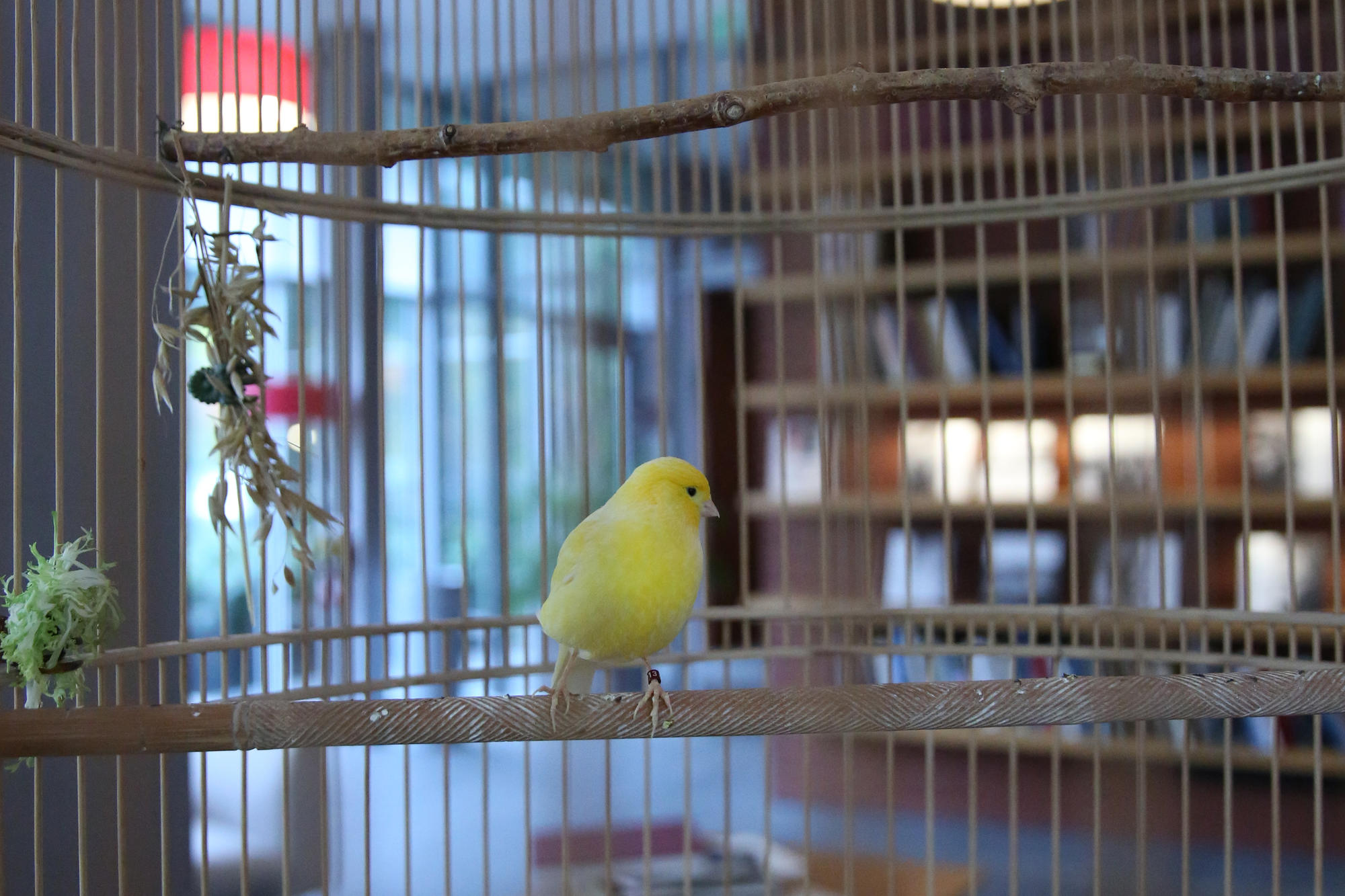 Whistler, our canary, makes his home in the Living Room