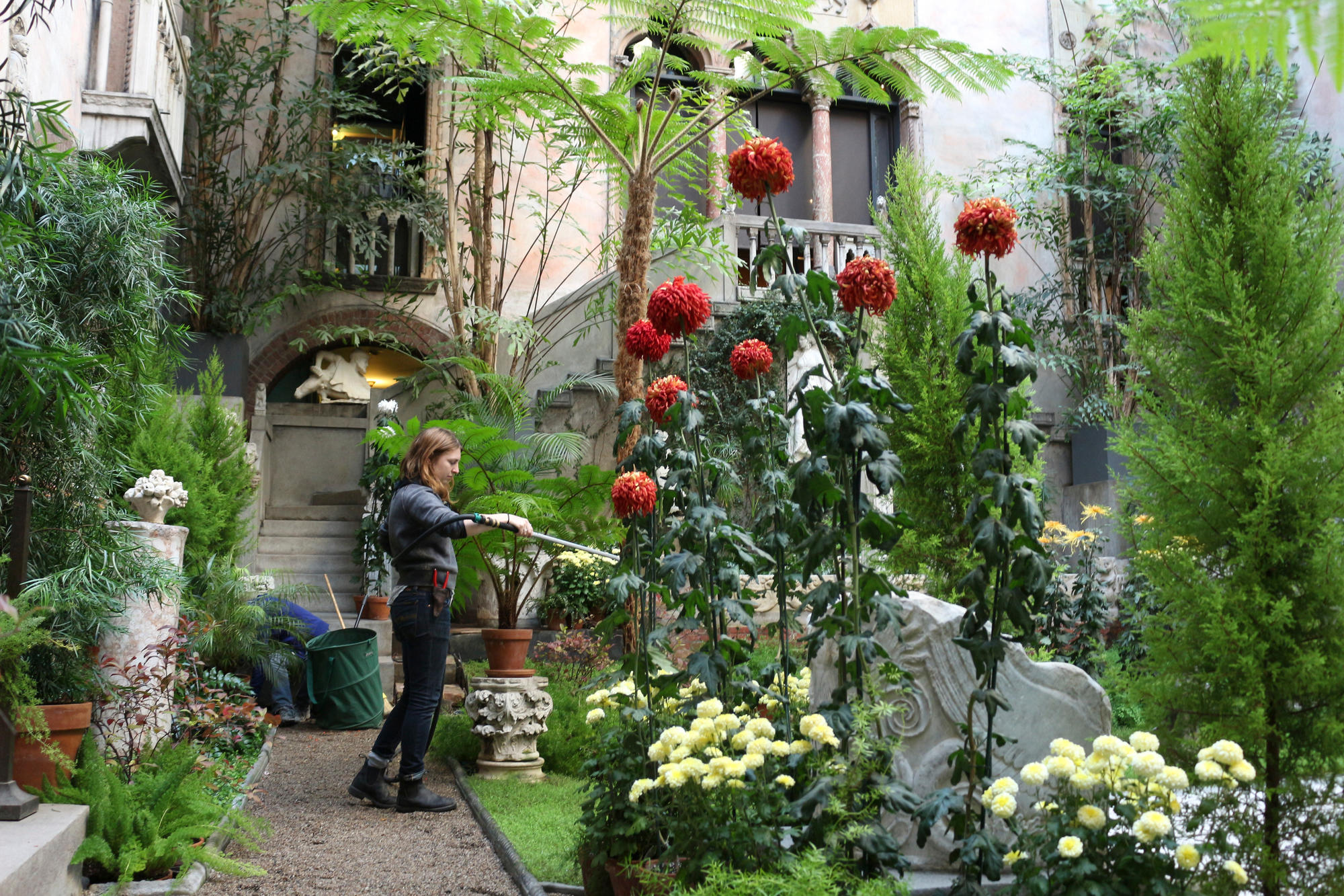 Someone watering the mums in the Courtyard of the Isabella Stewart Gardner Museum.
