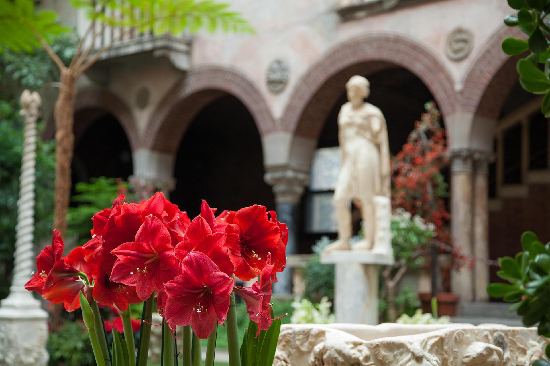 Red Amaryllis in the holiday garden courtyard at the Isabella Stewart Gardner Museum.