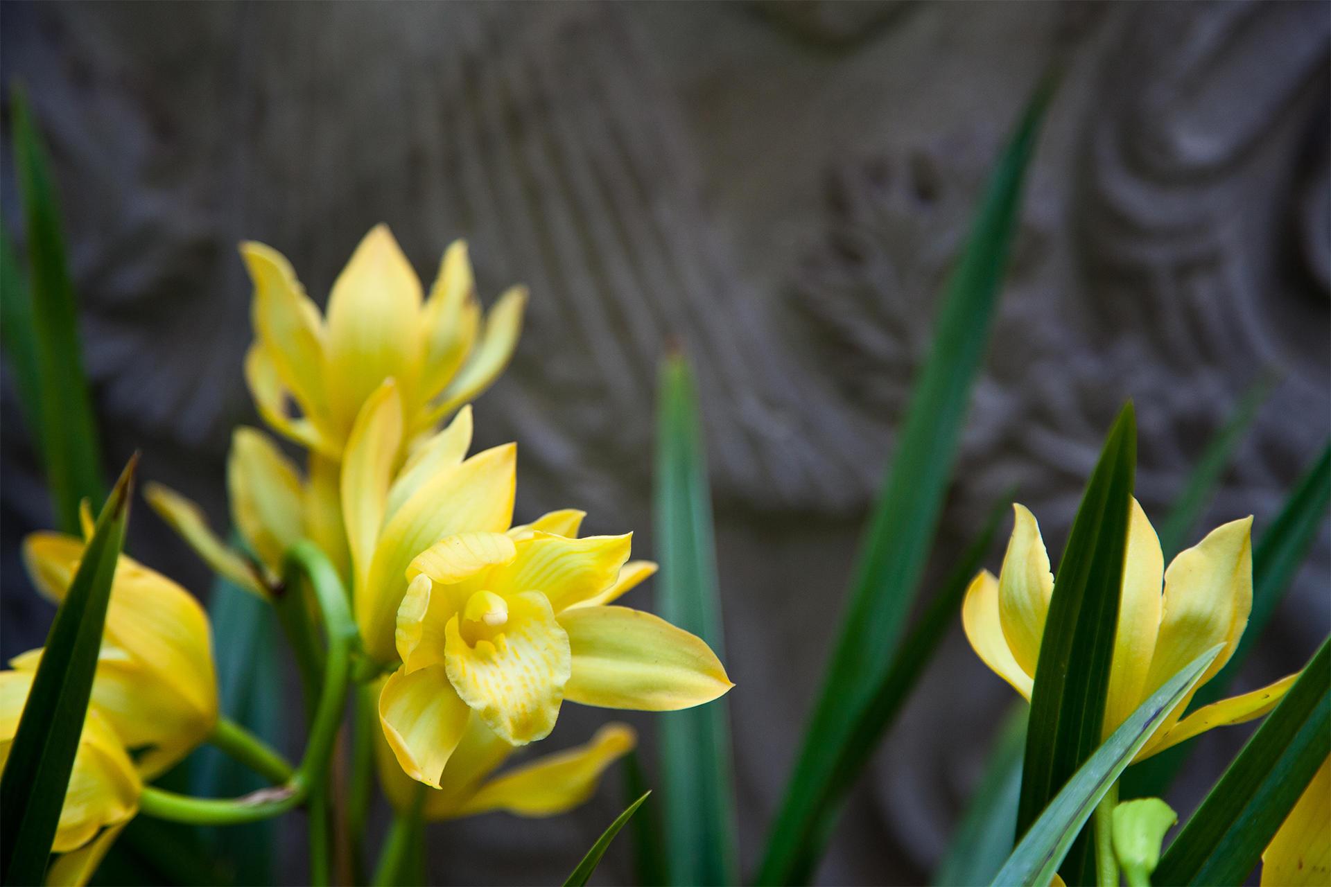 Midwinter Tropics courtyard display at the Isabella Stewart Gardner Museum.