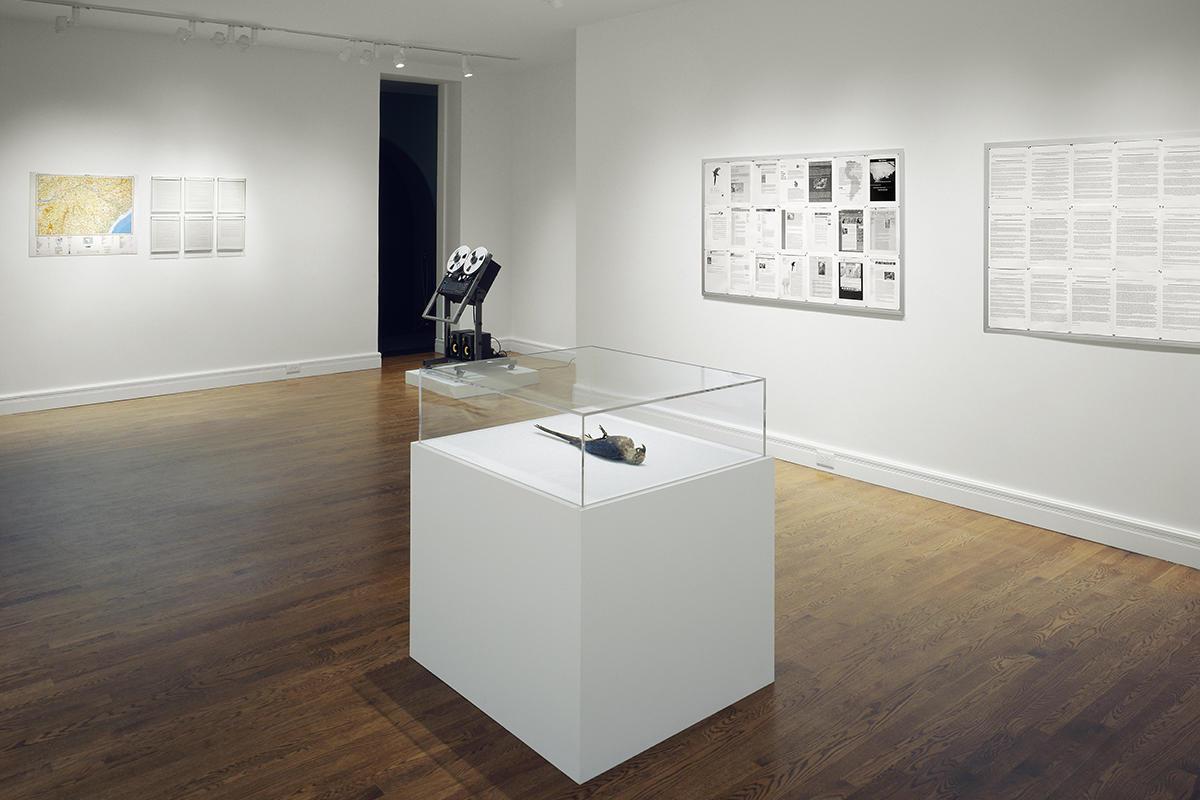 Exhibition view of Henrik Håkansson, Cyanopsitta spixii Case Study #001, Spix's Macaw specimen, Tascam 8-track reel-to-reel recorder, speakers, cork boards, photocopies, photograph. June 30 - September 17, 2006, Isabella Stewart Gardner Museum, Boston.